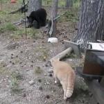 ニャンコが森のクマさんと遭遇!逃げるどころか喧嘩を売って勝利