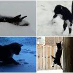 身も心も弾むニャ!ニャンコが初めての雪と出会ったときの反応10連発!