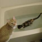 ニャンコのほっこりバスタイム!湯船に浸かって歩く猫とちょっかいを出したい猫