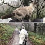 さすがお猫様!仲良しのお馬の背中に乗って優雅にお散歩にゃ