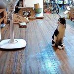 飼い主さんへの絶大な愛情表現に涙!下半身不随の猫が玄関へ歩む理由とは?