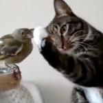 超ソフトタッチ!ニャンコと鳥の優しい触れ合いに心もポカポカ