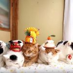 初癒しを補給!のせ猫たち流なお正月の楽しみ方