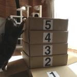 箱に滑り込む猫まるちゃんが跳び箱に挑戦!何段まで飛び乗れる?