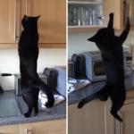 扉を開ける器用な黒猫さんがとんだ失態!でも金メダル級のリカバリー