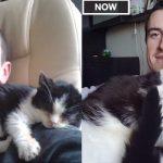 大人になると猫はどう変わる?生後3ヶ月の頃と現在を見比べられる比較動画