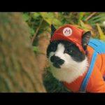 スーパーマリオの世界を猫が再現!さらわれたプリンセスを助けるため冒険の世界へ