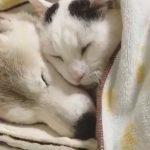 ふたりの絆の深さに感涙!認知症の犬を暖かく介助するヘルパーにゃんこ