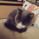 モフらずにはいられにゃい…!twitterで大反響な真ん丸シルエットの美猫さん