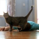 笑える実験!飼い主が死んだふりをしたら猫はどんな反応を見せるのか!?
