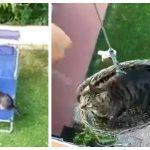 優雅なお猫様!庭で日光浴のあとは手動エレベーターで悠々ご帰宅