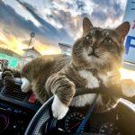 まるでCDのジャケ写!スタイリッシュな運転ポーズがユニークな猫写真