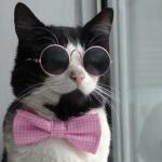 オシャレは小物使いが肝心にゃ!蝶ネクタイとグラサンでキメ顔の猫