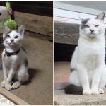 ビフォーアフターに驚き!愛猫との想い出が蘇る「#これ見た人は子猫が成長した画像貼れ」10選