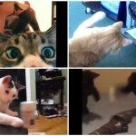 アレもコレも気に入らにゃいから攻撃にゃ!わがまま猫様たちの大暴れ集