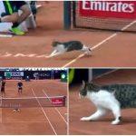 テニスのおネコ様!?試合中のテニスコートに乱入しダッシュで横断