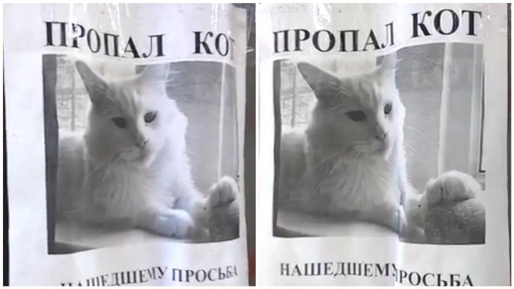 て 猫 くる 見つめ 猫がじーっと見つめてくるのはなぜ?