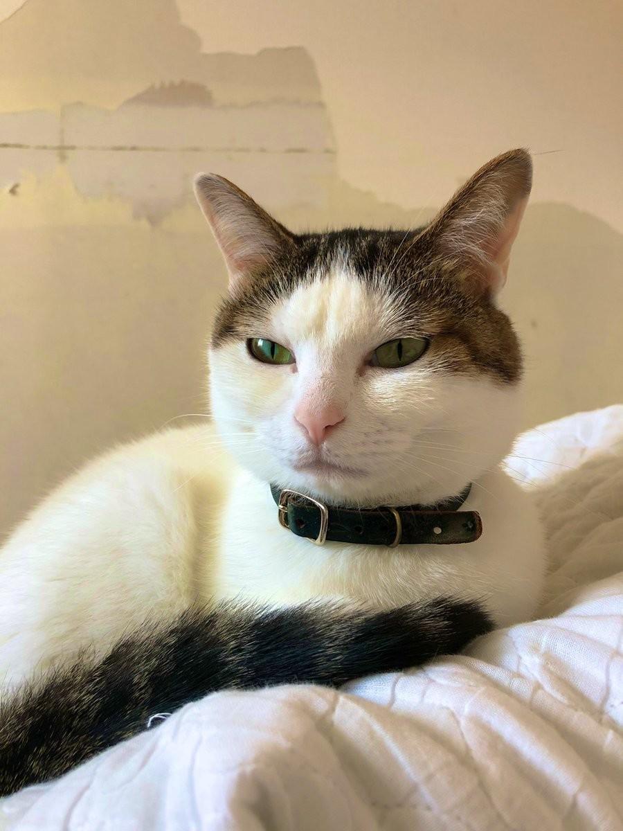 2019年4月版 Twitterで話題になった猫ツイート12選 ねこナビ