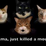 """<span class=""""title"""">名曲が猫アレンジで「ボヘミアン・キャトソディー」に!</span>"""