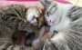 """命を落とした猫はゼロ!「Cat Room ねこりば」に学ぶ""""パルボウイルス感染症対策"""""""