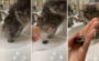 猫の手ってすごい!排水溝に落ちた指輪を取り出すニャ