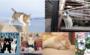 「飛び猫」を手がけた五十嵐健太さんの作品も!9月25日から大丸百貨店須磨店で「ねこ専」が開催